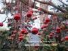 bozen-weihnachts-markt