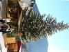 weihnachtsmarkt-bozen-17