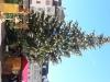 weihnachtsmarkt-bozen-7